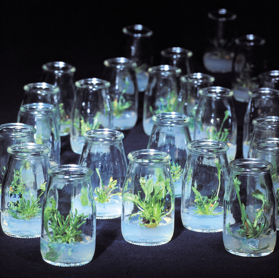 plant-trial-6-highres