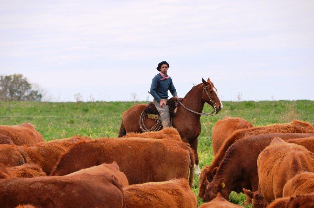 LS-OF-Gaucho-herding-cattle-Sep-2013_ls-1024x678