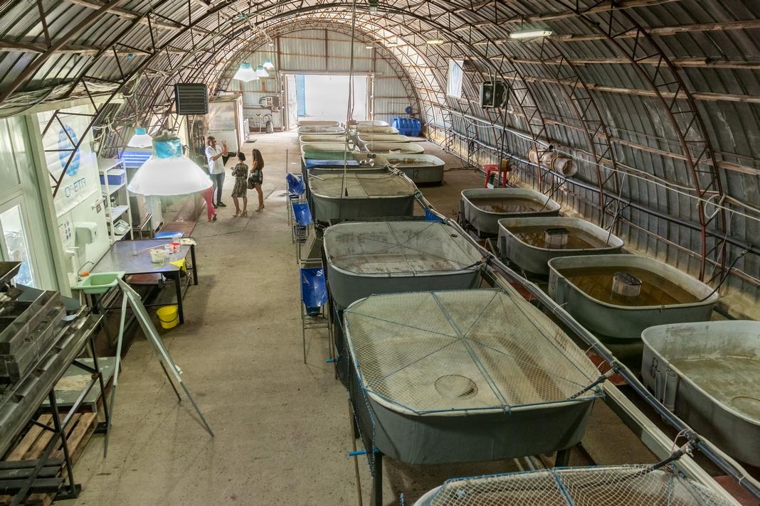Малька рыбы выращивают по специальной технологиивзакрытых бассейнах, оснащенных системами контроля климата и циркуляции воды