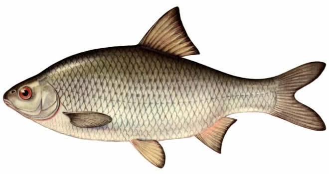 Чемпіонат міста Києва з риболовного спорту з лову риби спінінгом з берега