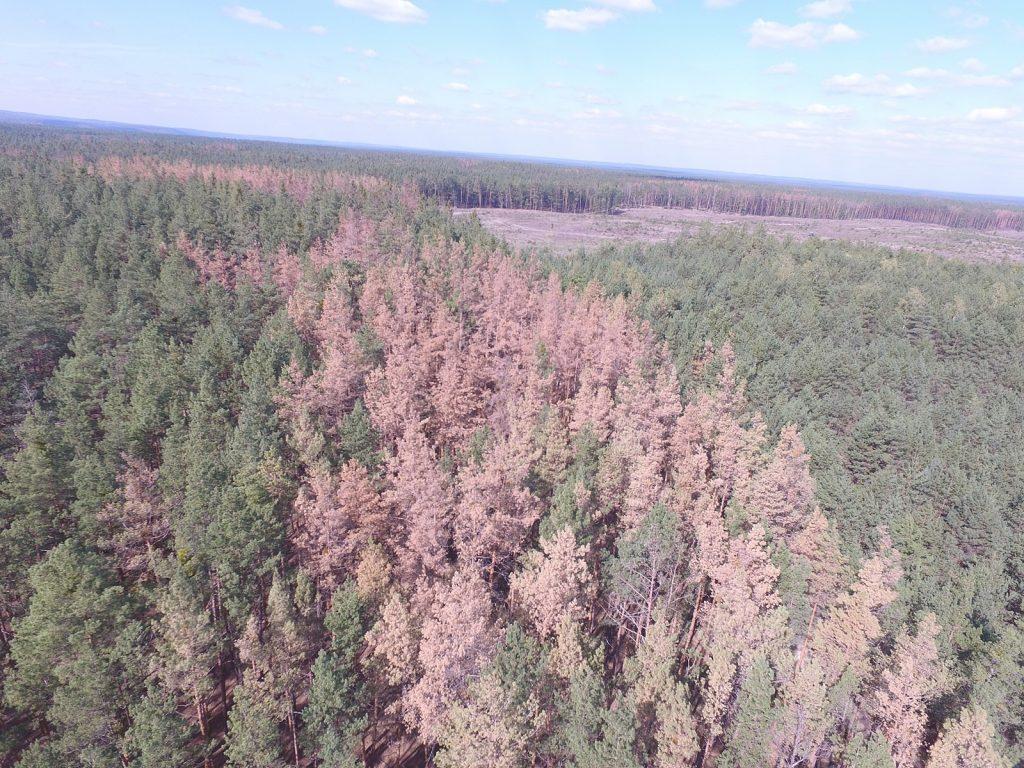 У Держлісагентстві, заради рятування лісів від всихання, запустили ...