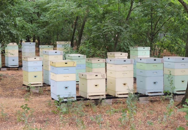 На Херсонщине население держит 45000 пчелосемей, и это не считая фермерских пчел