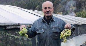 Виноград у теплицях: майстер-клас від 77-річного фермера