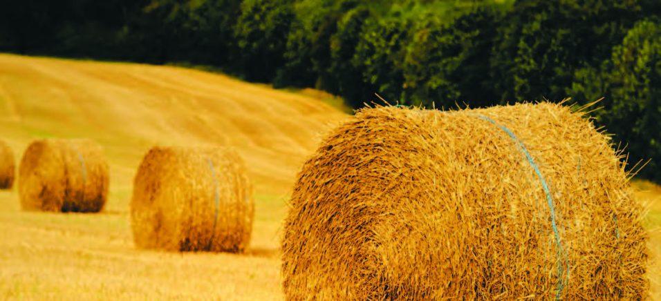 Енергетична солома або скільки рослинні рештки можуть давати енергії
