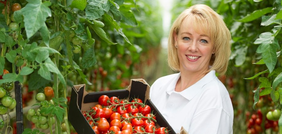 Туманоутворення в теплицях: бельгійський виробник томатів впроваджує новітні системи