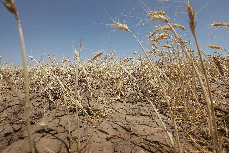 Українські чорноземи перетворюються на пустелю: 25 млн га землі ...